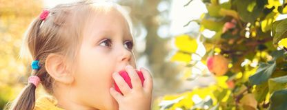 Little girl baby eats seasonal apples royalty free stock photos