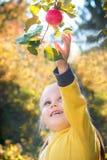 Little girl baby eats seasonal apples stock photo