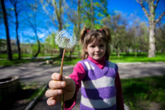 Little girl on a background of green grass with a dandelion Stock Photography