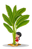Little girl and banana tree Royalty Free Stock Photos