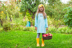 Little girl with basket of apples in sunny autumn Stock Image