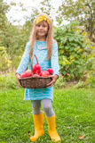 Little girl with basket of apples in sunny autumn Royalty Free Stock Photography