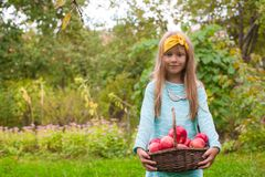 Little girl with basket of apples in sunny autumn Stock Photos