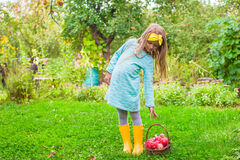 Little girl with basket of apples in sunny autumn Royalty Free Stock Photo