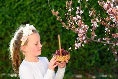 Little girl with basket of the first grape fruits during the Jewish holiday, Shavuot in Israel. stock image