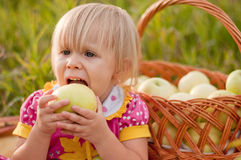 Little girl with basket of fresh apples Stock Images
