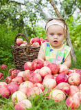 Little girl with a basket of red apples Royalty Free Stock Image