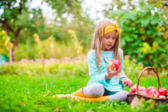 Little girl with basket of red apples in sunny Royalty Free Stock Image