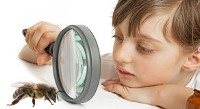Little girl and bee Stock Photography
