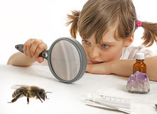 Little girl and bee Royalty Free Stock Photography