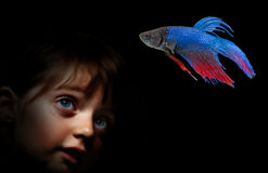 Little girl behind aquarium looking on fish Royalty Free Stock Image