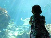Little Girl Big Aquarium Stock Photo