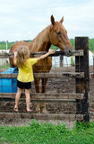 Little girl and big horse Stock Photos