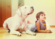 Little girl with big white dog stock photos