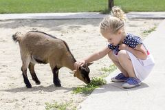Little girl and billy goat Royalty Free Stock Image