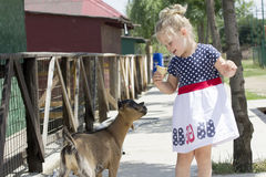 Little girl and billy goat Stock Image