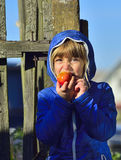Little girl biting apple in the garden. Toddler eating fruits at fall harvest. Outdoor fun for children. Healthy nutrition Stock Image