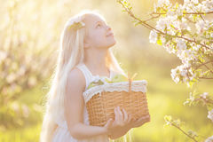 Little girl in blossom garden with basket of apples Stock Photography