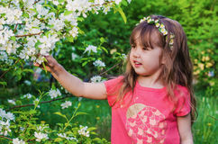 Little girl in blossoming Apple orchard Stock Photos