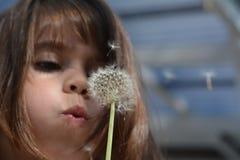 Little girl blow Dandelion plant Royalty Free Stock Image