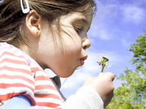 Little girl blowing a dandelion Royalty Free Stock Photo