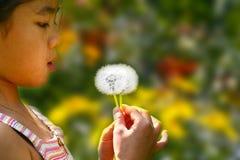Little girl blowing a dandelion. Little chinese girl blowing a dandelion Royalty Free Stock Photo