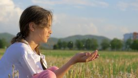 Little girl blowing a dandelion seeds at sunset or sunrise while relaxing in the park. Flying seeds catkins particle springtime pe. Pretty little girl blowing a stock footage