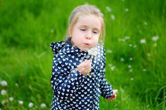 Little girl blowing on white dandelion. On spring day Stock Photos