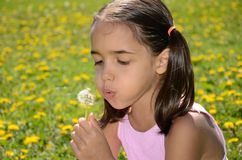 Little girl blows a dandelion Royalty Free Stock Photo