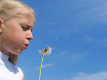 Little girl blows on dandelion stock photos