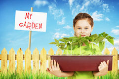 Little girl with a box of seedlings in the garden Royalty Free Stock Images