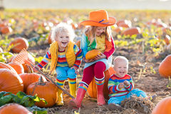 Kids picking pumpkins on Halloween pumpkin patch Stock Photography