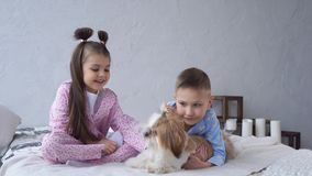 Little girl and boy cuddling with dog on bed. Happy childhood. stock footage
