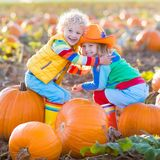 Kids picking pumpkins on Halloween pumpkin patch. Little girl and boy picking pumpkins on Halloween pumpkin patch. Children playing in field of squash. Kids pick Stock Photography
