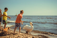 Little girl boys kids on beach have fun with swan. Little girl boys children kids having fun with swan on beach at sea. Summer vacation holidays relax Royalty Free Stock Photos