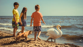 Little girl boys kids on beach have fun with swan. Royalty Free Stock Photos