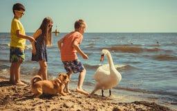 Little girl boys kids on beach have fun with swan. Stock Photos
