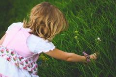 Little girl breaks the flowers Royalty Free Stock Photos