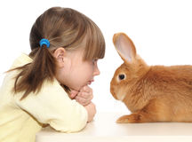 Little girl and brown rabbit Stock Images