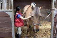 Little girl brushing her favorite horse stock images