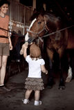 Little girl brushing horse