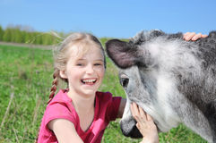 Little girl with calf Royalty Free Stock Photography