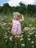 Little girl and camomiles Stock Image