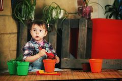 A little girl caring for potted flowers. Little girl caring for houseplants Stock Images