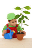 Little girl caring the plant. Isolated on white Stock Photos
