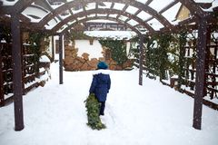 Little girl in carries a Christmas tree to her home on snowfall winter day. Kid drags green spruce or fir tree on snow. Little girl in carries a Christmas tree stock image