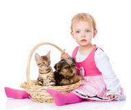 Little girl with a cat and a dog sitting in a basket. Isolated om white Royalty Free Stock Images