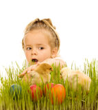 Little girl catching the easter chicks Royalty Free Stock Photography