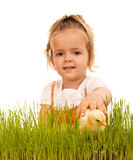 Little girl catching fluffy chicken in the grass - isolated Royalty Free Stock Photos