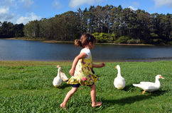 Little girl chasing wild duck Stock Photo